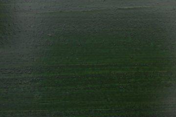 Öl-Lasur OSMO - Tannengrün
